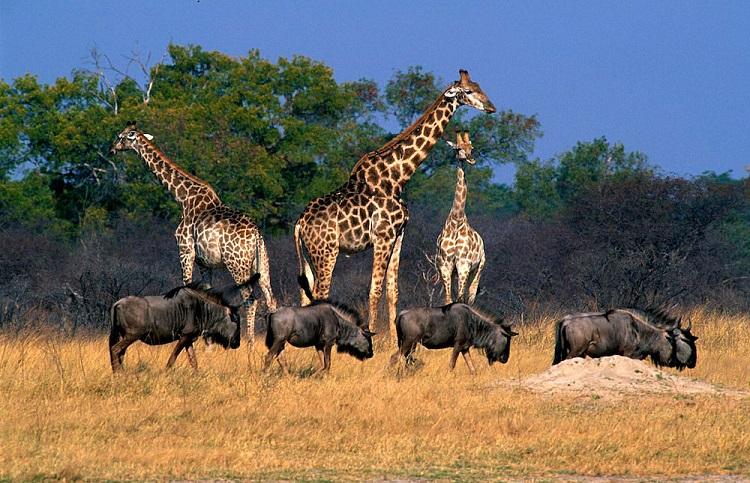 Victoria Falls Marathon and Safari