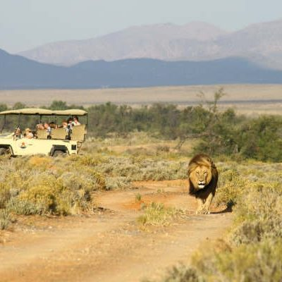 Inverdoorn Private Game Reserve Safari
