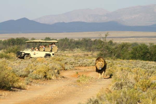 Inverdoorn Private Game Reserve Safari